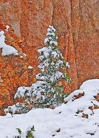 Snowy tree - 4 Ebb Tidei